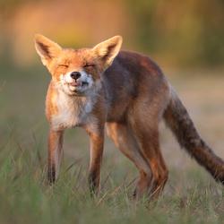 Say Cheese! :)