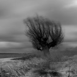 Wind storm zwart wit
