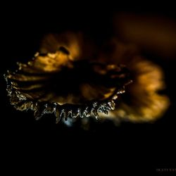 Glow Edge in the Dark...