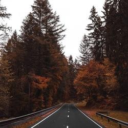 Weg met herfst kleuren