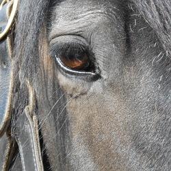Paard en Erfgoed '17