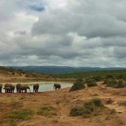 Addo Park Zuid Afrika