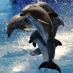 Sea World...