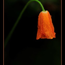 Nat en Oranje
