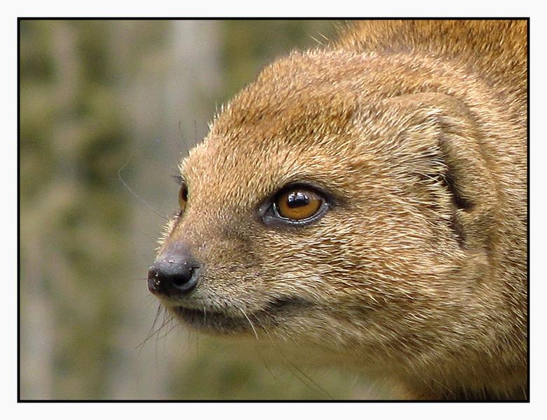 Portret - Geen idee wat voor een dier dit is.<br /> <br /> Maar als model is hij geslaagd.<br /> <br /> loop wat achter met reageren, maar dat kom