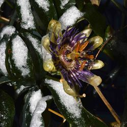 DSC_7486 frozen flower