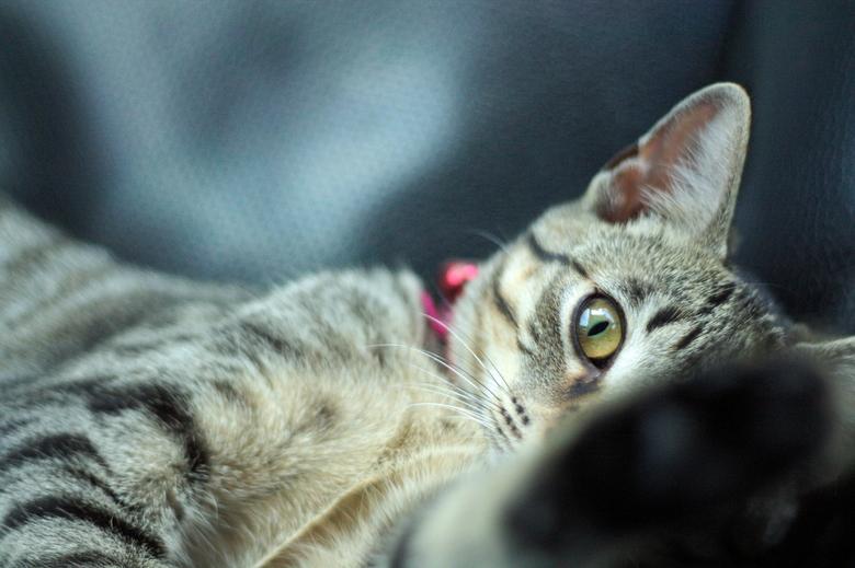 "Peekaboo! - Mijn nieuwe kitten: Yuna <img  src=""/images/smileys/smile.png""/>"