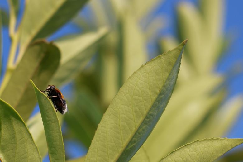 beestje - Eigenlijk houd ik helemaal niet van dit soort kleine insecten, maar als ze voor mijn neus op blaadjes gaan zitten, moet je er natuurlijk wel