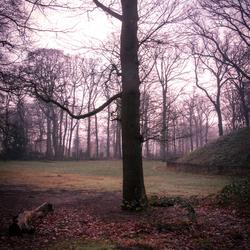 Boom gemaak in het bos Alkmaar