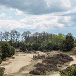 Mantingeveld