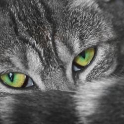 Look me in the eyes