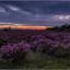 Ermelose Heide