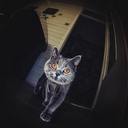 Lola op jacht