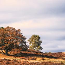 Posbank Autumn