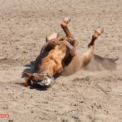 pony dominique