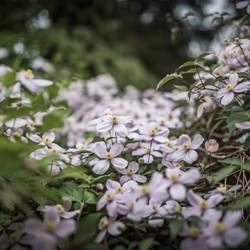 Beetje bloemen en beetje bokeh!