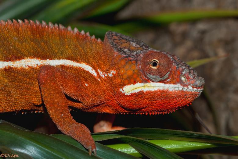 """Red... - Nog 1 van de tropical zoo serie <img  src=""""/images/smileys/wilt.png""""/>"""