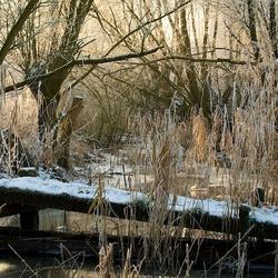 Winter in de Biesbosch