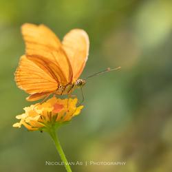 Summer orange.