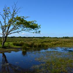 Natuurgebied De Vroongronden