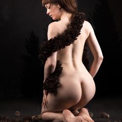 boa and pine cones