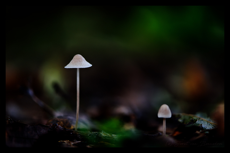 In the dark forest ... - ... the mushrooms are growing.