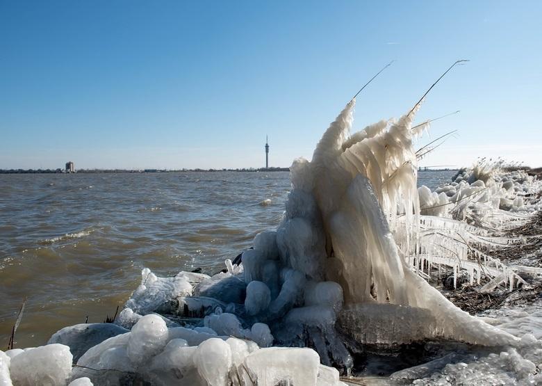 IJssculpturen - Mooi bevroren rietstengels.