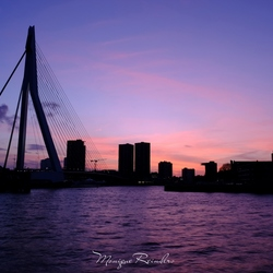 Rotterdam in paars