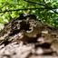 Eekhoorn perspectief