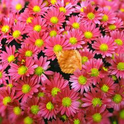 Ook herfstkleuren