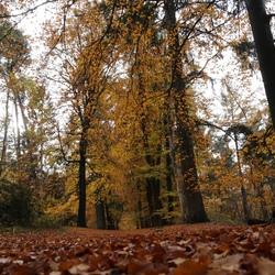 Goudgele herfst