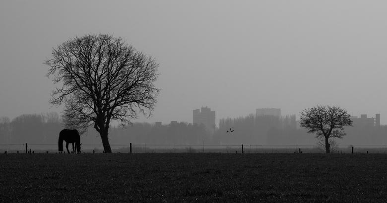 Zwarte paard - Las vanmiddag het nieuwe artikel over zwart wit landschap in Zoom.nl en had een tijdje terug nog wat foto's gemaakt van een landsc