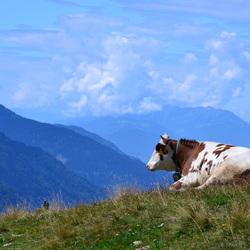 Bijzondere ontmoetingen in Oostenrijk
