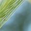 Unsharp grasss
