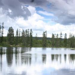 Fulufjallet (Pan Park WWF) Zweden