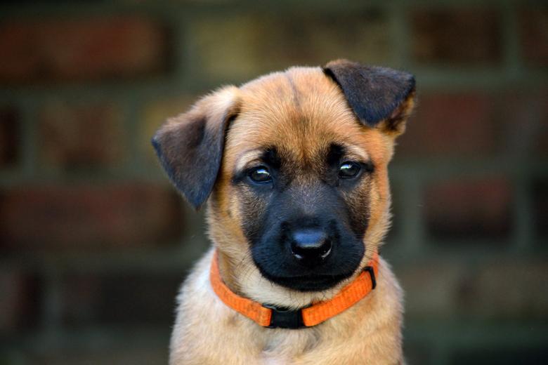 Puppy - Deze ondeugd zat klaar voor de aanval want ja die camera is toch wel heel erg interessant en willen we natuurlijk ook wel even proeven