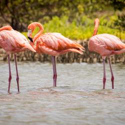 Flamingo x3