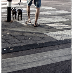Stripes and O-legs
