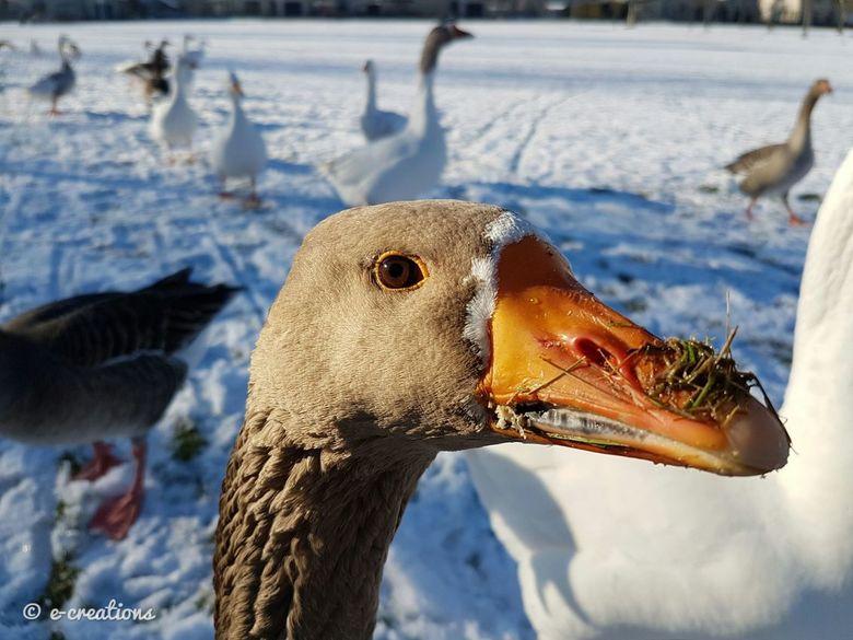 Kiekeboe! - Kiekeboe! Zeg mevrouw, heeft u nog meer brood? Wij hebben nog steeds trek! Hallo? Bent u daar? Hallo?!!
