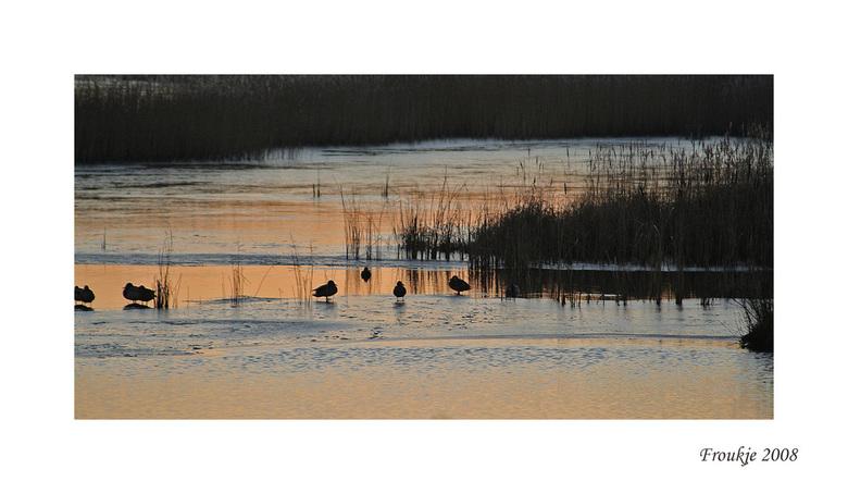 open water - Gelukkig was er nog een wak voor de vogels .<br /> Bedankt voor de reacties op mijn schaapjes foto .<br /> Groetjes Froukje
