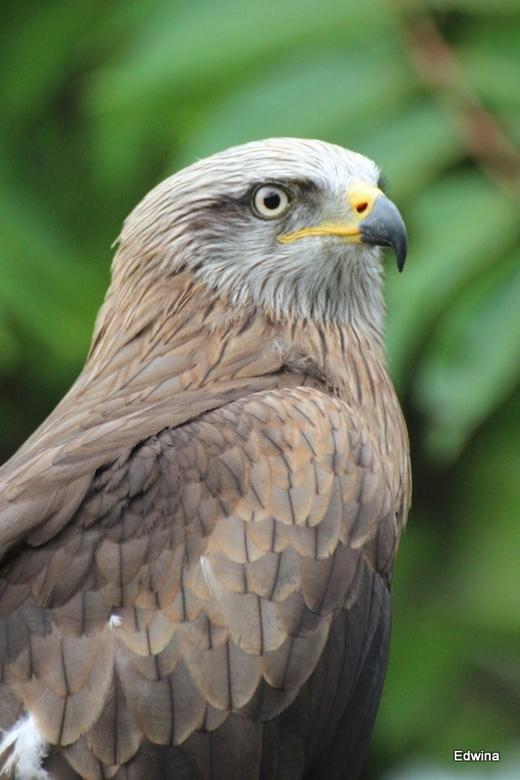 Wauw - Wat een machtige vogel