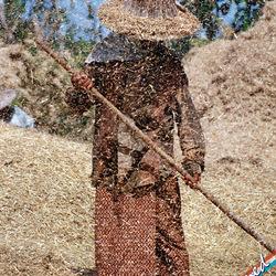 Rijstoogst in Thailand