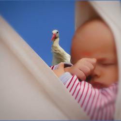 Bewerking: tóch een baby gebracht.................
