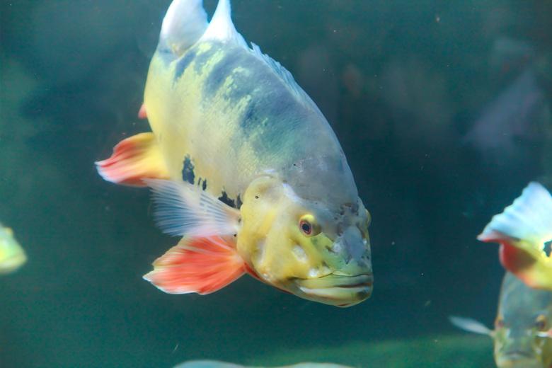 vissen in Blijdorp -