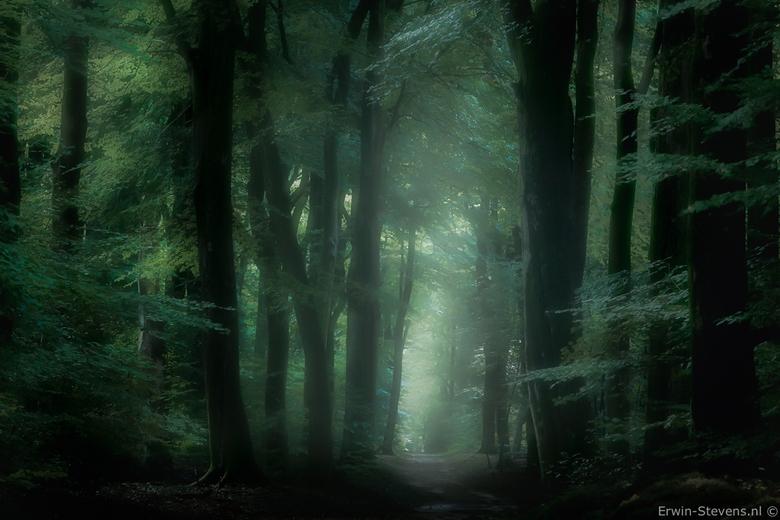 Green forest - Nog net voordat alles in de herfstkleuren schiet..