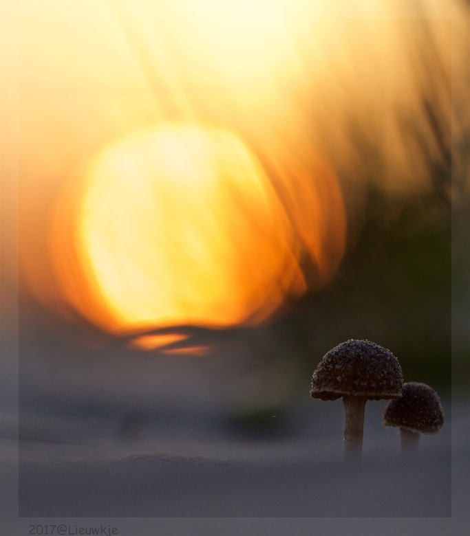 vakantie is....samen naar de zonsondergang kijken  - Gisteravond op het strand van Schiermonnikoog gefotografeerd bij ondergaande zon