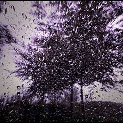 purple rain..