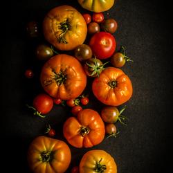 Tomatentrio