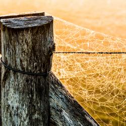 Paal met spinnenrag