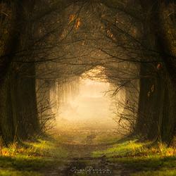 Fairy Road.